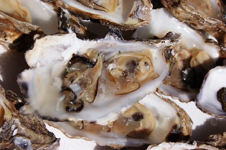 Cultivated oysters are one of the stars of the New Wine and Food Festival.