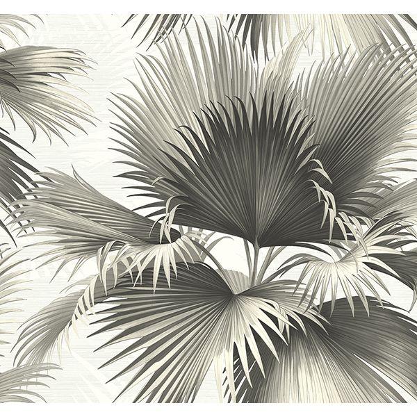 Endless Summer Black Palm Wallpaper Palm wallpaper, Palm