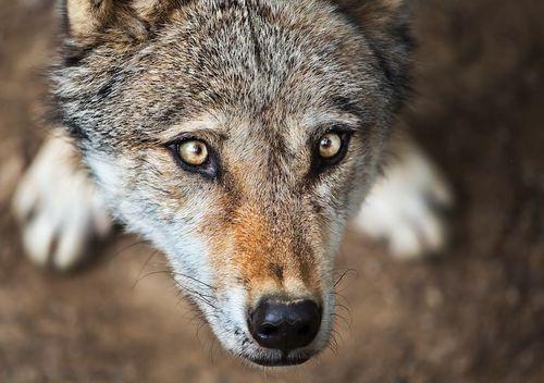 Beautiful. – Wolf