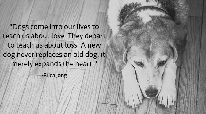 11 Inspirational Quotes about Dogs That Will Make Your Day | Rover Blog