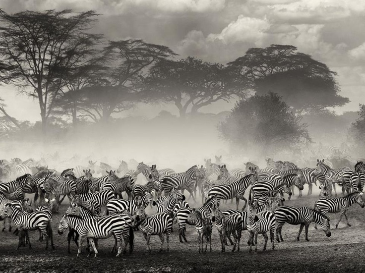 BEAUTIFUL PLANET EARTH  serengeti - tanzania