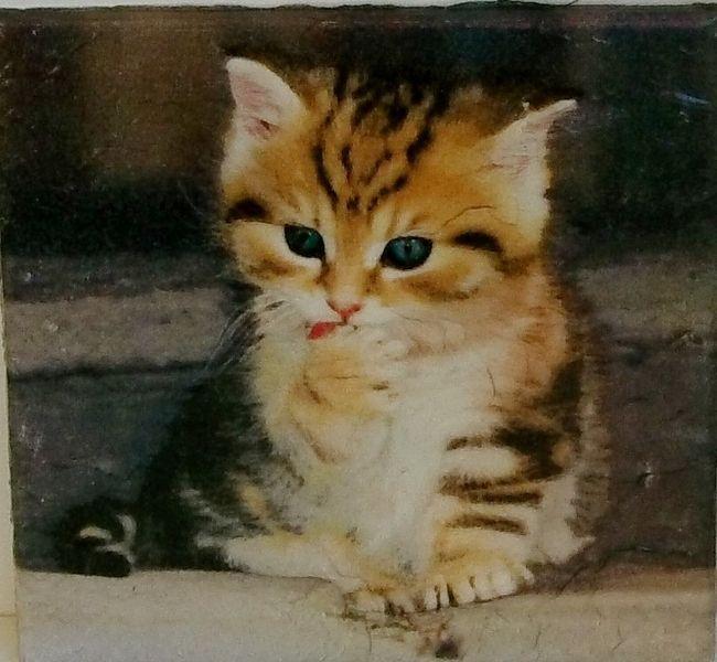 """Wandbild Kinder """"kleines Kätzchen"""" Fliese Serviett von Manu's kleine Vintage Schatzkiste auf DaWanda.com"""