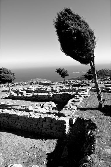 Our Sifnos The wind had its toll on these trees GREECE