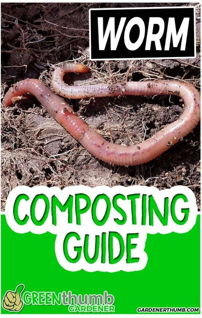 How To Get Rid Of Worm Casts In Your Lawn