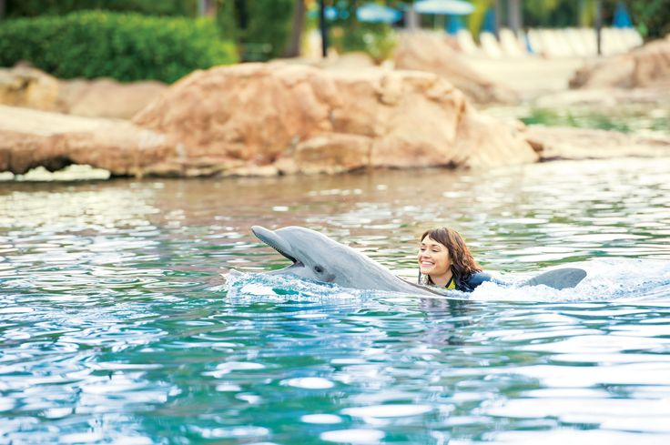 Expect a bucket list experience like no other at Dolphin Lagoon.