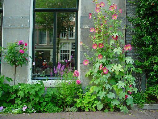Leeuwarden    Small urban garden. Hollyhocks. Geveltuin.