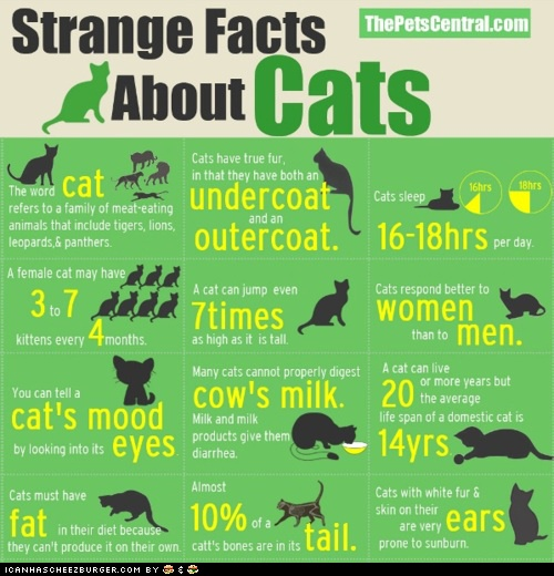 Strange Facts About CatsKitty Cat, Catlady, Strange Facts, Fun Facts, Crazy Cat Lady, Cat Facts, Cat Lovers, Catfacts, Animal