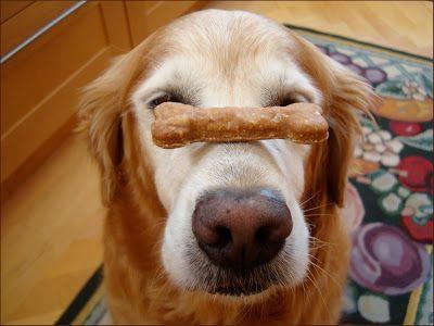 10sec Trick n Treat: Dog Treat On My Nose Contest + Recipe: Peanut Butter Banana Oats Dog Treat - Sugar The Golden Retriever Dog Blog