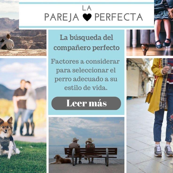 Explore la revista por categoría: La pareja perfecta <3 Factores a considerar para seleccionar el perro adecuado a su estilo de vida. Leer más en http://ift.tt/2qQ0ifO