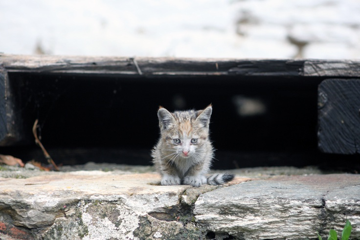 a small Kitten at Mount Athos...