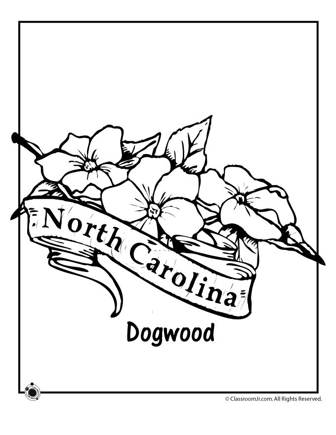 State Flower Coloring Pages North Carolina State Flower