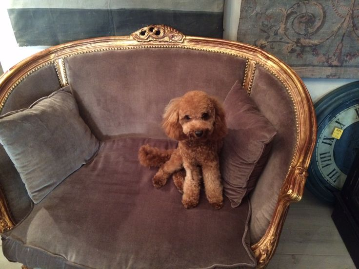 From Rasta Dog to Princess #life #dog #ortensia #vitadacani #poggioaisanti #relais #suite #cani #sanvincenzo #tuscany