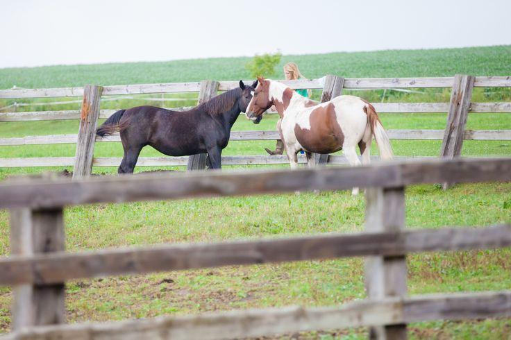 Ridgeview Ranch Iron Ridge Wisconsin The Horses Are Part