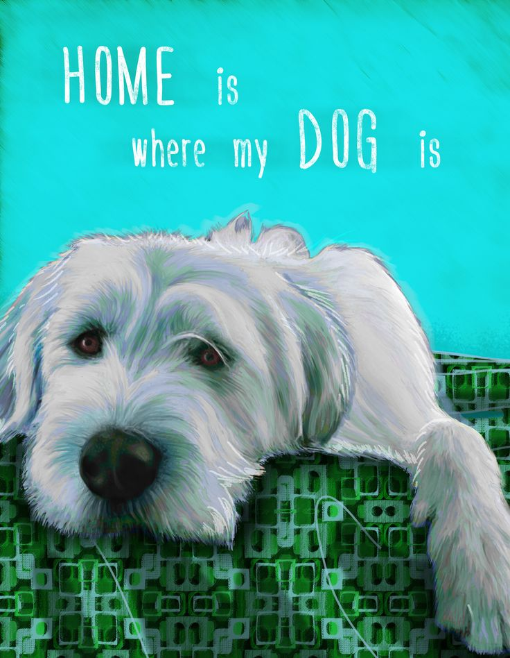 Home is where my dog is. Digital portrait of Great Pyrenees mix from photograph