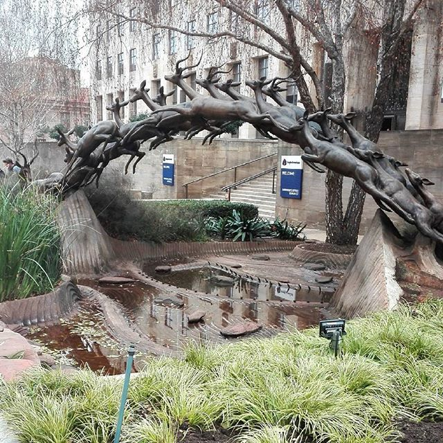 The Leaping Impala in front of the Anglo American Buildings in Johannesburg. #jozi  #sculpture #art #heritage #walkingtours #southafrica #igerssouthafrica #travel #cityscape