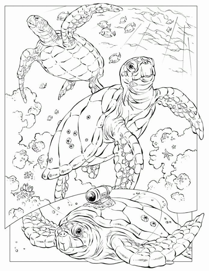 Sea Turtle Coloring Page Realistic Youngandtae Com In 2020 Turtle Coloring Pages Ocean Coloring Pages Animal Coloring Pages