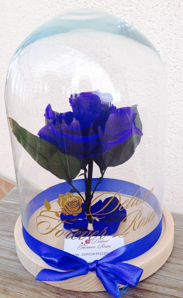 Vadító királykék örök rózsa üvegbúrában:17.900Ft