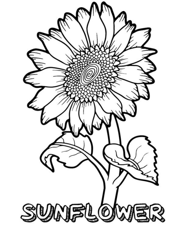Free Sunflower Coloring Pages For Kids Sunflower Coloring Pages