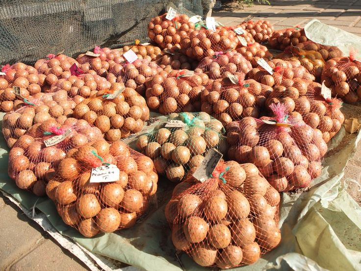 Delicious macadamia nuts, South Africa | One Footprint On The World