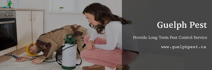Guelph Pest is your local #pest #exterminators, provides reliable pest #control services at affordable costs. Contact us if you want effective & long-term pest control, whether it is a #spider, #rat, #ant, #flea, #bedbug, #cockroaches, etc.