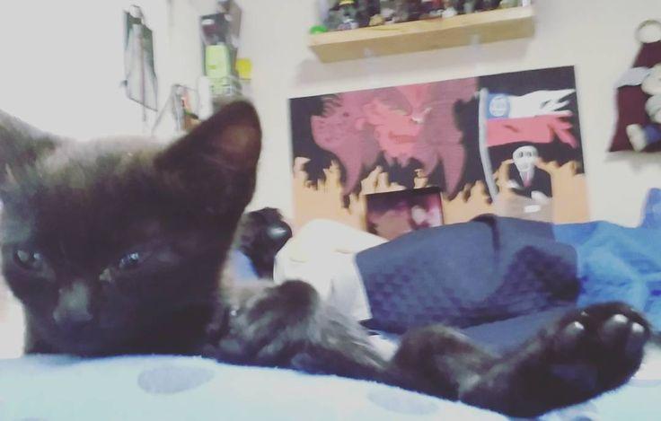 ET... Xd hablando de patuos... #cats #catstagram #catsofinstagram