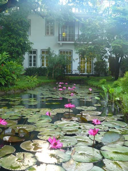water lily pond old harbor hotel kerala india house