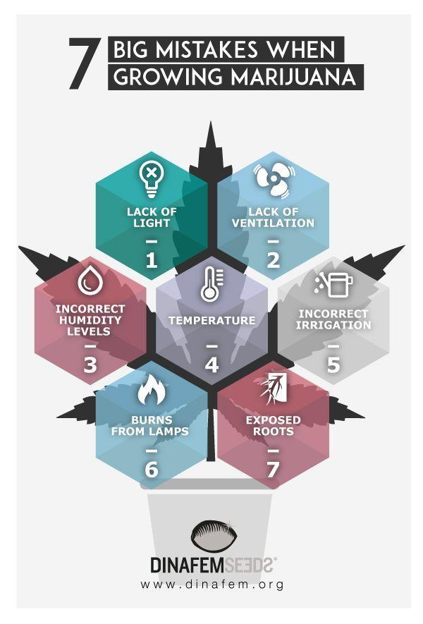 7 big mistakes when growing #marijuana