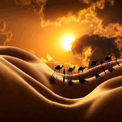 Sunset, desert, camels | Camels & Deserts | Pinterest