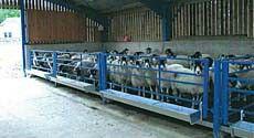 Sheep slats