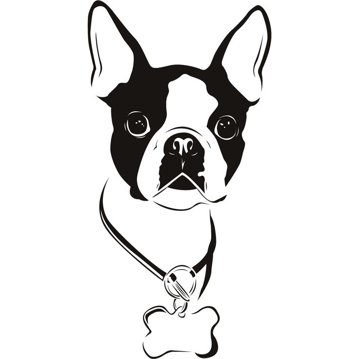 Boston Terrier Dogs Animals Wall Art Stickers Decal Transfers picture