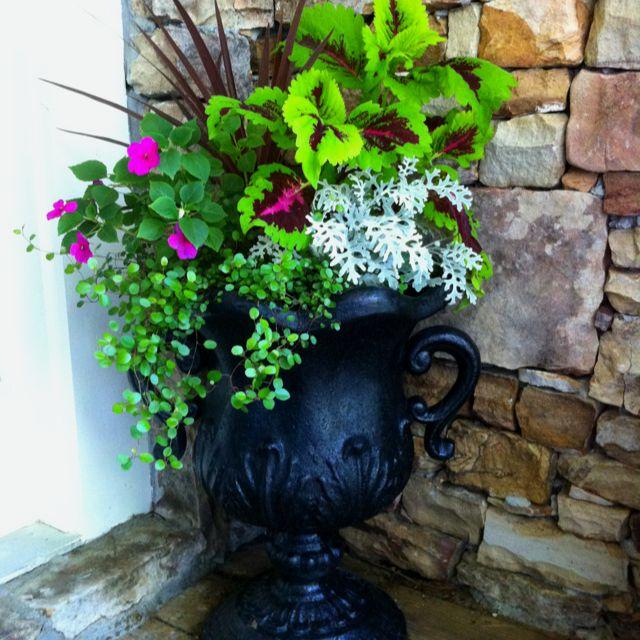 My front door flower pots outdoor garden pinterest - Outdoor plants for front door ...