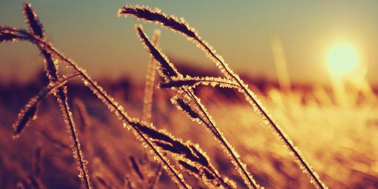 Macro Nature Sunset Twitter Cover & Twitter Background | TwitrCovers