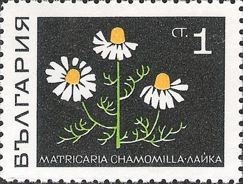 Bulgaria: Medicinal Plants, Matricari chamomilla - (Plantas medicinais, Camomila vulgar) 1969