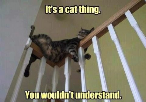 I certainly don't understand!!!