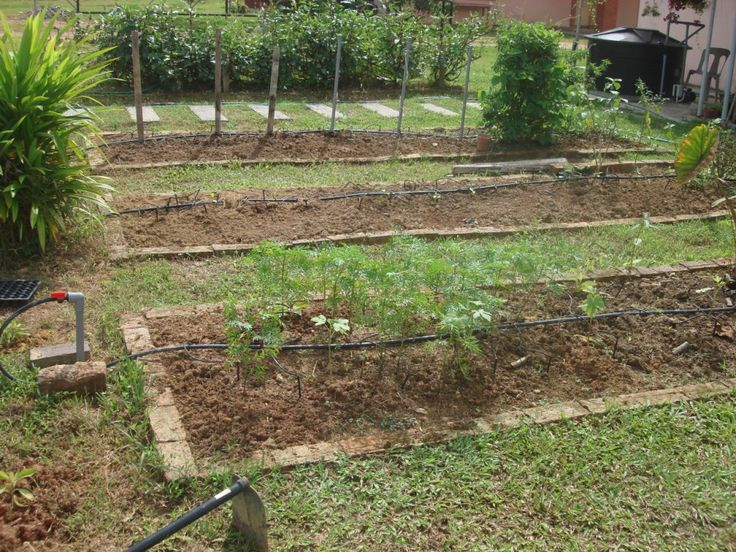 small vegetable garden ideas my little vegetable garden garden design and its outcome