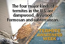 Depending on where you live, termite swarms may be visible in the early spring. Termite swarms can sometimes be confused with flying ants. Telltale signs of a termite infestation include soft, decayed wood in the home, mud tubes in the interior or exterior of your home (often near the foundation), and darkening or blistering of wood structures. Fecal pellets like in this picture are also evidence of termites.