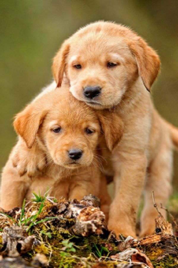 Have You Smiled Today If Not You Need To Watch Puppy Love Video Cute Dog Pictures Puppies Baby Animals Funny