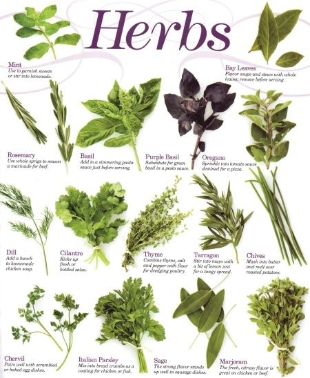 herbs... pick some for edible landscape for front yard