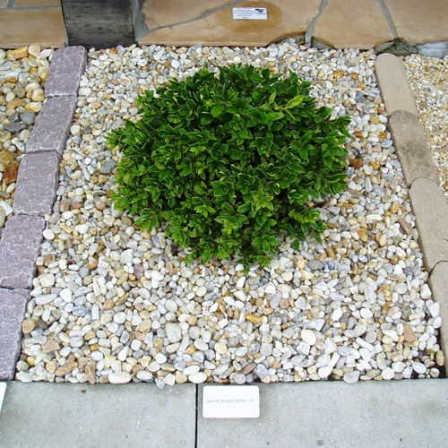 17 best images about backyard plantation on pinterest - Smooth stones for landscaping ...