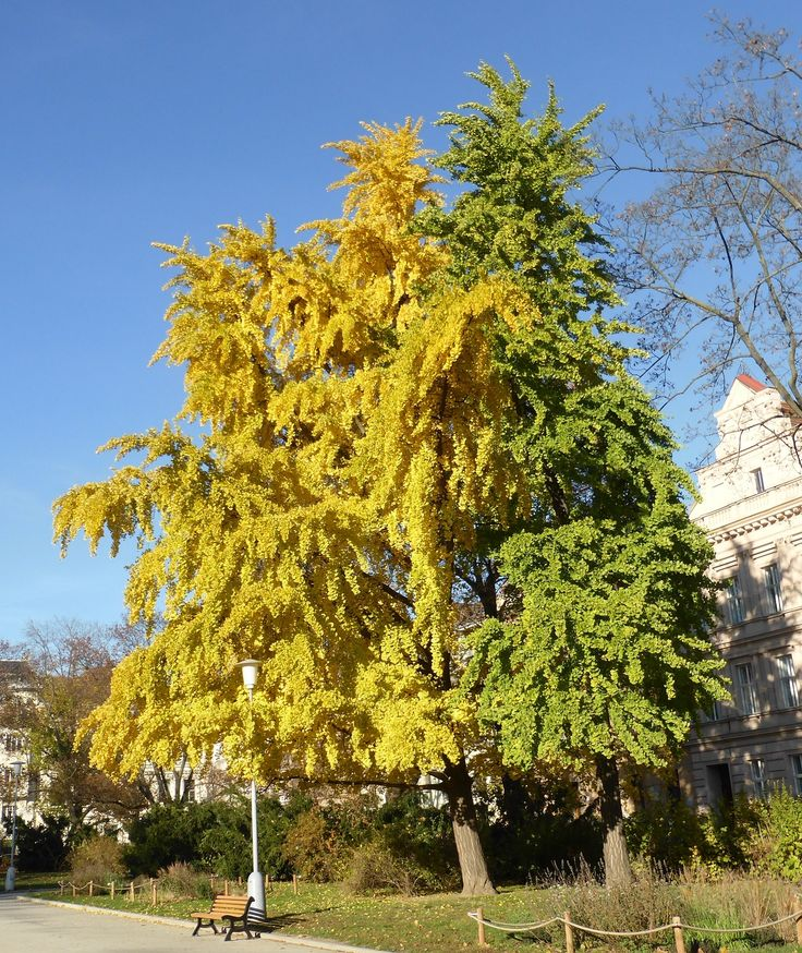 Colourful autumn - yellow and green
