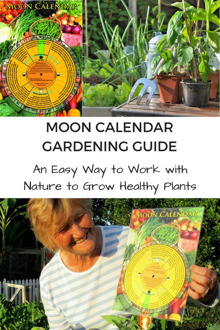 20 Best Garden Books Resources Images On Pinterest Container Garden Gardening Tips And