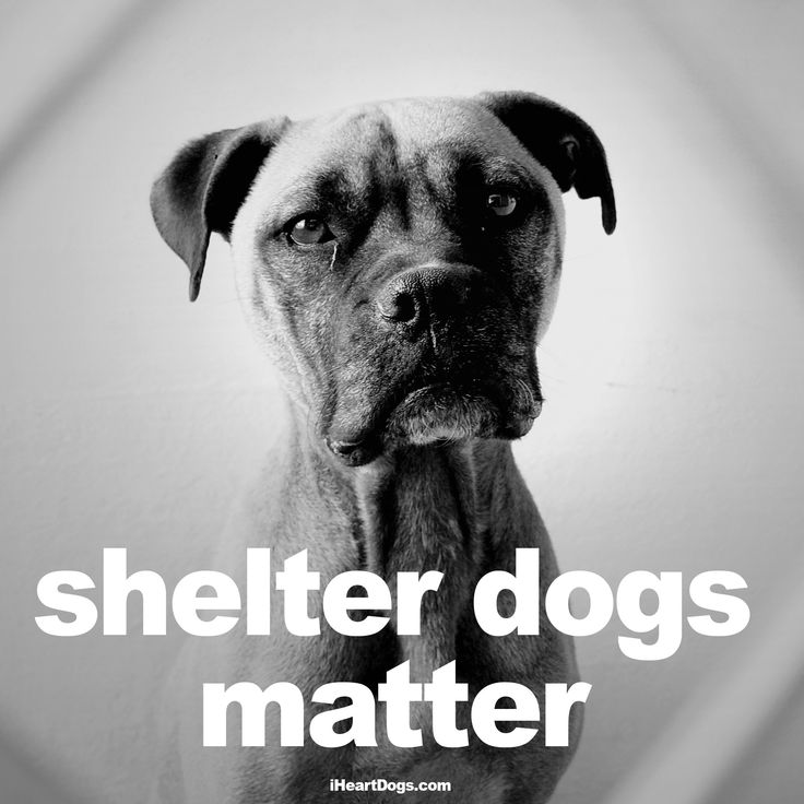 Shelter dogs matter. Yes they do. http://iheartdogs.com