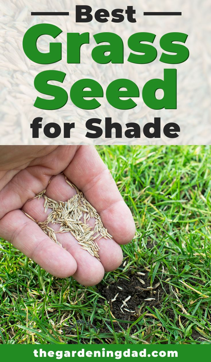 9 best grass seed for shade 2020 grass seed for shade