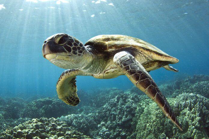 Poznejte podmořský život v Sea Life Jesolo | JedemeNaDovolenou.cz