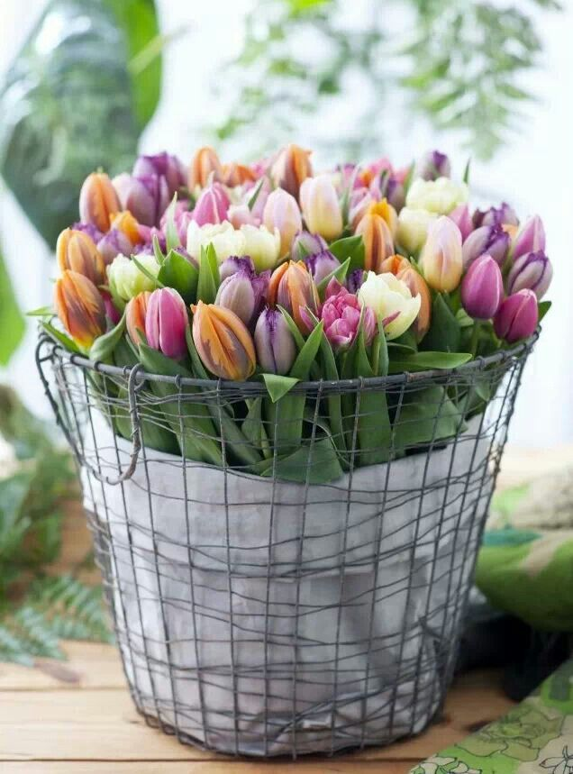 Tulips! Envying the flowers now in season in Europe ♥