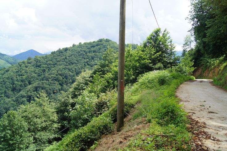 #rize #turkey #nature #forest #amazing #green #scenery #beautiful