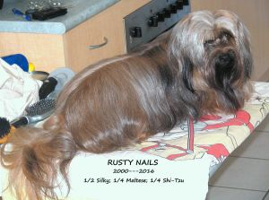 Rusty Nails on his grooming table which doubles as our quick snack table