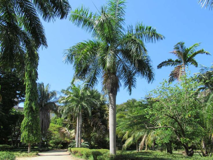 Laid out in 1893, the Botanical Gardens is one of the few Dar es Salaam parks open to the public. Most other parks are fenced and gated to keep out vagrants.