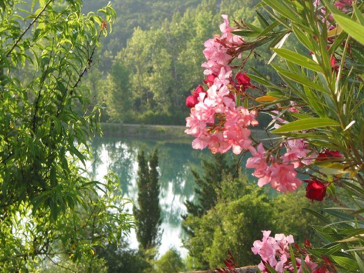 Veduta del lago #lago #fiori #ariaaperta #relax #barca #pesca #profumi #toscana #turismo #star bene #natura #passeggiata #trekking #veduta #panorama