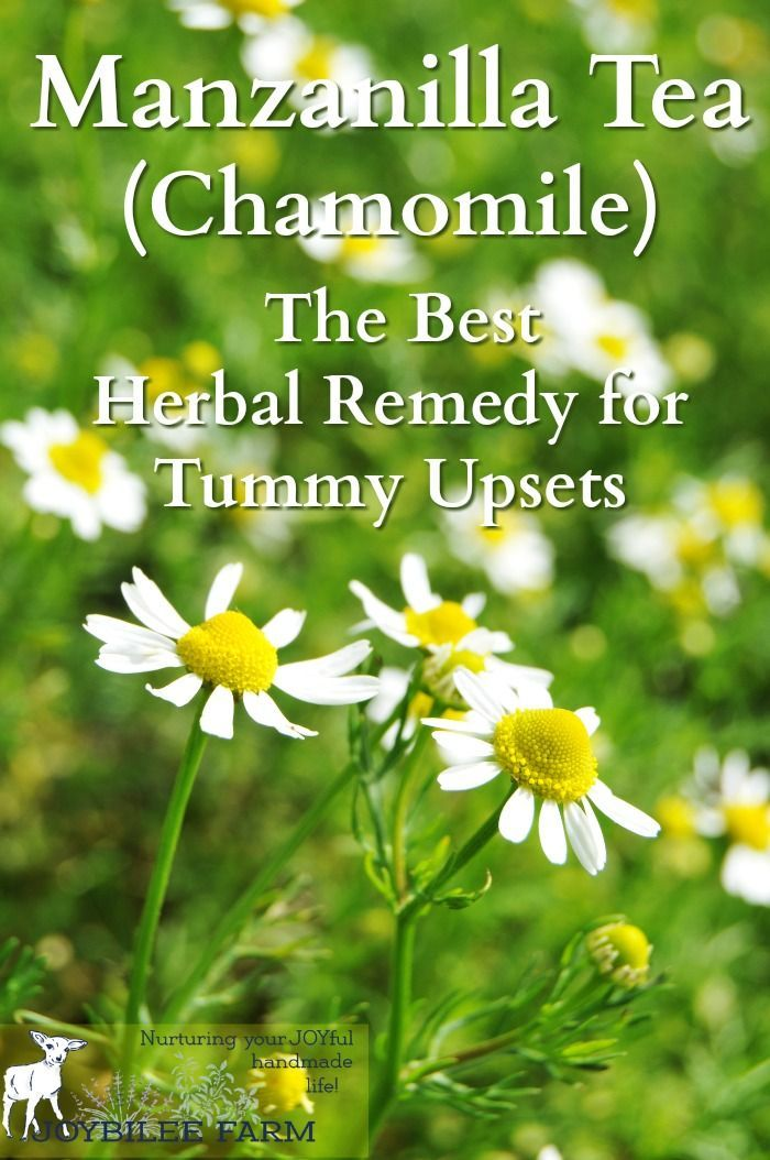 "Chamomile tea, called manzanilla or ""little apple"" in Spanish, due to its apple-like scent, is one of the best herbal remedies for anxiety and sleeplessness. A cup of manzanilla tea before bed soothes and relaxes the mind, without leaving you groggy in the morning. It is safe for young children, pregnant women, nursing mothers, and the elderly. And while you probably know it well as a sleep and anxiety remedy, you probably didn't realize that manzanilla tea is one of the best remedies for…"